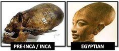 Image result for Long-headed skulls Malta