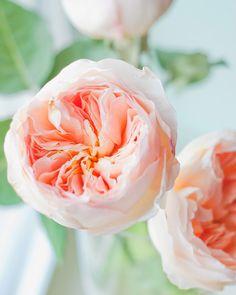 Flowers: Garden Roses for September wedding