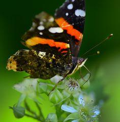 Little Butterfly     www.wunderground.com