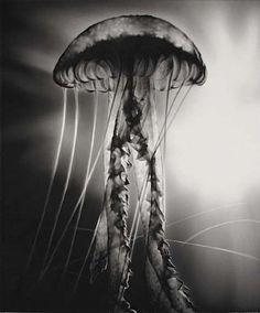 Robert Longo, Untitled (Aliens)