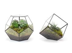Dodecahedron and Cube Terrarium — ACCESSORIES -- Better Living Through Design