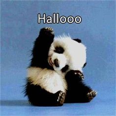 If you're feeling a little lonely or under the weather, here's a collection of cute and funny panda memes that will surely brighten up your day! Baby Animals Pictures, Funny Animal Pictures, Animals And Pets, Cute Pictures, Cute Little Animals, Cute Funny Animals, Cute Dogs, Cute Babies, Panda Lindo