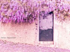 Wisteria. One of my favorite flowing plants for it's grape-like cluster of flowers. I know Spring is here when I see this flowering.
