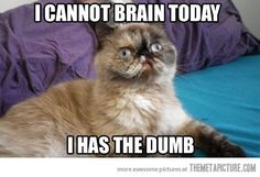Omg. Exactly how I felt today. Nothing like a little sinus infection to fog your brain.