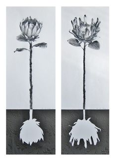 protea series - Ira van der Merwe, Artist and Art Teacher