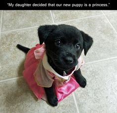I don't even care that the puppy's wearing a dress. The puppy's just so damn cute <3