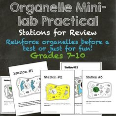 """Use this activity as a """"half lab"""" (as it will only take half the class) or a Fifteen different stations covering both plant and animal cell organelles.  Ideal for use before a test as a review!15 stations  complete with a hint (students answer what the highlighted organelle is)."""
