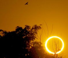 "'Ring of Fire' Solar Eclipse. This photo of an annular solar eclipse was taken on May 20, 2012 in Roswell, NM, USA. The Moon's orbit isn't exactly circular and the Moon seems smaller when it's more distant. This means it doesn't quite cover the Sun during an eclipse. (Credit: Joel Dykstra) Mona Evans, ""Solar Eclipses"" http://www.bellaonline.com/articles/art28395.asp"