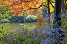 central Park foto de A.Koch
