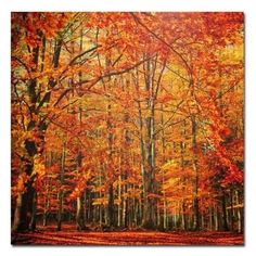 Trademark Art Red November Canvas Wall Art by Philippe Sainte-Laudy, Size: 35 x Multicolor Canvas Wall Art, Canvas Prints, Art Prints, Nature Sauvage, Autumn Scenes, Autumn Aesthetic, Nature Aesthetic, Fall Pictures, Fall Photos