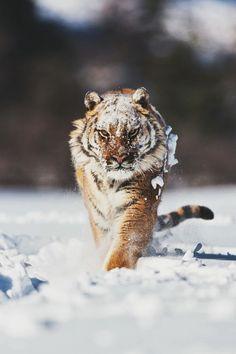 Snow Stalking by Suha Derbent