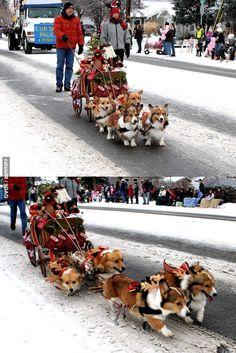 Corgi Express - the cutest sleigh ever!