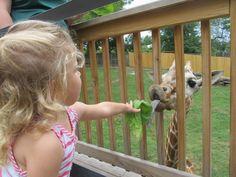 Elmwood Zoo- Norristown, PA