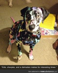 poor dog...although this would be an awesome breed! The rainbow Dalmatian.