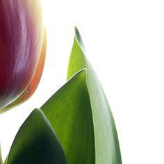 Harald Gach | Photographs Vienna, Photographs, Fruit, Flowers, Photos, Royal Icing Flowers, Flower, Florals, Floral