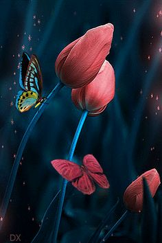 Butterflies and Flowers : Photo