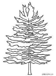 Pine Trees Coloring Page Tree Coloring Page Forest Coloring