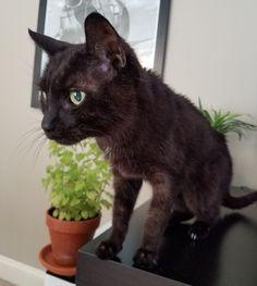 My little Jake gave me 17 years of joy. Rest in peace buddy. http://ift.tt/2r4l367