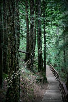 Forest, Green, Trail, Trees, Nature, Parksville, Qualicum, Bc, British Columbia, Canada