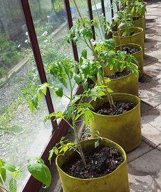 Window Greenhouse, Gardens, Tips, Plants, Inspiration, Biblical Inspiration, Outdoor Gardens, Plant, Conservatory