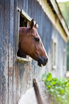 Country Living ~ horses and barns