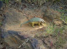 Cretaceous Footprints Found on Goddard Campus
