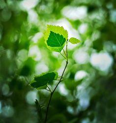 Garden Magic by Sortvind on DeviantArt