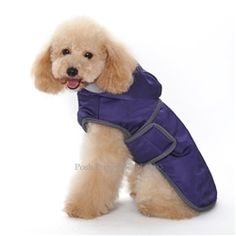 7aa90229a041 Classic Trench Coat in Purple #dog #puppy #dogs #dogproducts  #poshpuppyboutique Pet
