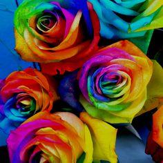 Multicoloured roses!