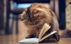 Ler te deixa fofa. Porque você consegue dar um fora, uma cantada ou uma ironia com inteligência. (Li Mendi - Autora de mais de 13 livros. www.limendi.com.br)  #limendi #livros #book #books