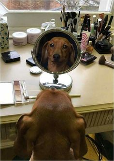 Doxies never need makeup: they're already perfect! For More Pet Gifts: http://www.damniwantit.net/category/pets/