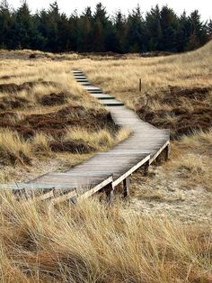 Amrum - Germany