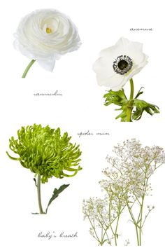 Ranunculus, anemones, spider mums and baby's breath flowers: just a few of our favorite whites + greens