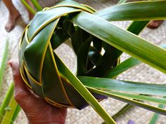 palm frond art how to do it | ... workshop I got to weave my first items with coconut palm fronds