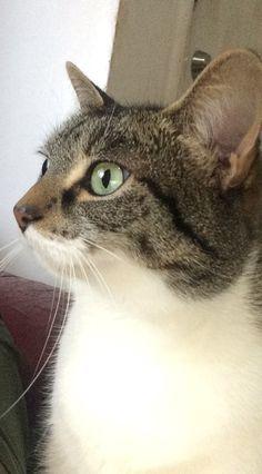 Those eyes!!!! Jasmine 💚💚💚