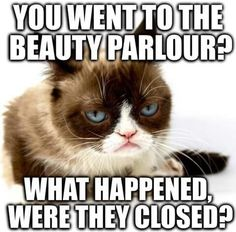 Lol - funny animal quotes - - lol the post lol appeared first on gag dad. Grumpy Cat Quotes, Funny Grumpy Cat Memes, Cat Jokes, Stupid Funny Memes, Funny Cats, Funny Minion, Funny Animal Quotes, Animal Jokes, Funny Animal Pictures