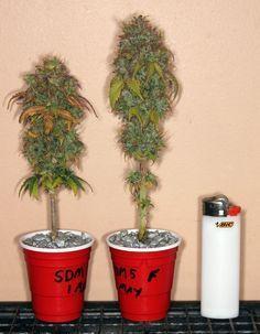Cannabis micro grow by Stunted