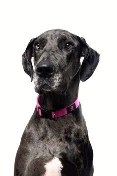 Took a portrait of my dog http://ift.tt/2klgUZ6