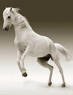Free Image on Pixabay - Mare, Animal, Nature, Ride Free Pictures, Animal Pictures, Free Images, Beautiful Horses, Animals Beautiful, Cute Animals, Free Horses, Wild Horses, Horse Wallpaper