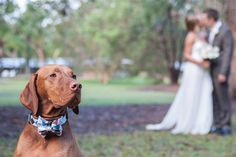 #wedding #pets #dog