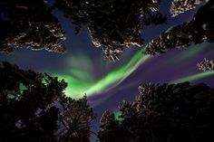 Northern Lights in the backyard! There are some advantages in the long winter nights of Lapland.