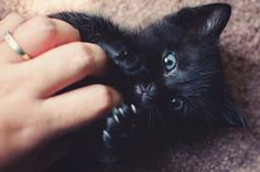 Luna the kitten // black kitten with blue eyes