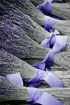 Lavender: Lavandula #LavenderFields