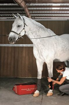 Cryotherapy is known to have anti-inflammatory and pain relieving effects, both of which help affected horses. Equestrian Outfits, Equestrian Style, Horse Therapy, Horse Anatomy, Horse Fashion, English Riding, All About Horses, Horse Tips, Horse Care