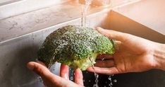 あなたはブロッコリーの正しい洗い方を知っていますか?ちゃんと洗っているつもりでもつぼみの中は意外と虫がいっぱいなのですよ・・・