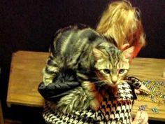 Pixie Bob cat 11 loves so hard - Dichroic Glass Man.AVI