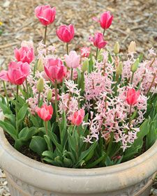 I want to plant some pots of spring bulbs this fall and then put them down the walk next year. I really like how this one looks.