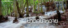 น้ำตกป่าหวาย ความงามของน้ำตกหินปูนที่มีมากกว่า 100 ชั้น จังหวัดตาก | สะดุดตาดอทคอม เว็บไซต์ท่องเที่ยว เที่ยวทุกจุดสะดุดตา เที่ยวในประเทศ เที่ยวต่างประเทศ