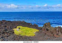 Spain, Europe, Canary Islands, Lanzarote, National Park, Volcano, blue, cactus, plants, coast, ecology, el golfo, - Stock Image