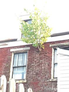 Hiç Kimseyi Sallamayıp Kafasına Estiği Gibi Yaşayan 23 Atarlı Ağaç